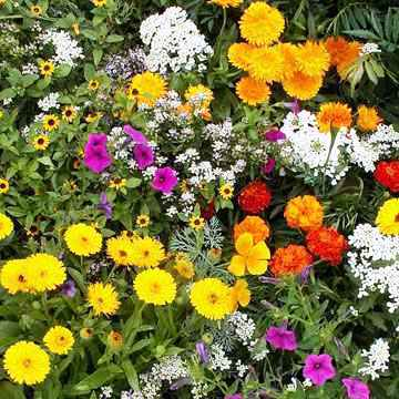 Annual Mix Flowers Seeds