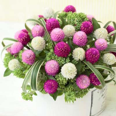 Gomphrena Mix Flowers Seeds