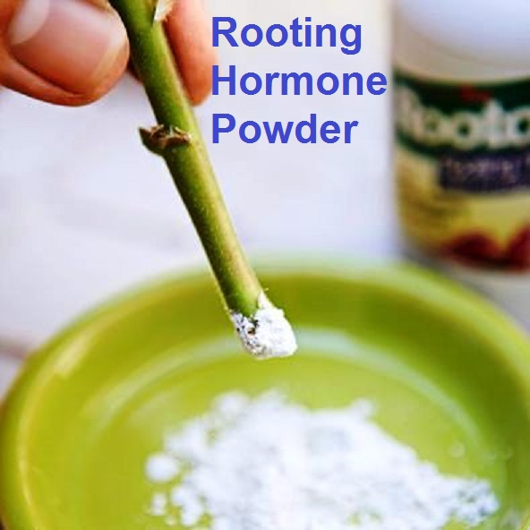 Organic Hormone Rooting Powder