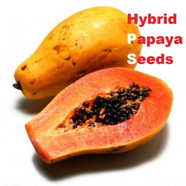 Hybrid F-01 Papaya Seeds