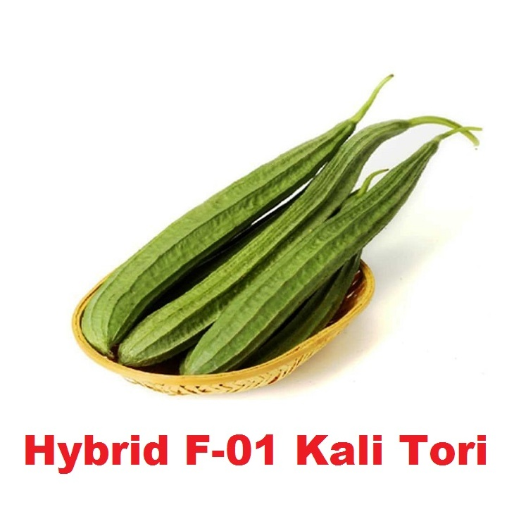 Hybrid F 01 Kali Tori Seeds First Online Agriculture Store Pakistan
