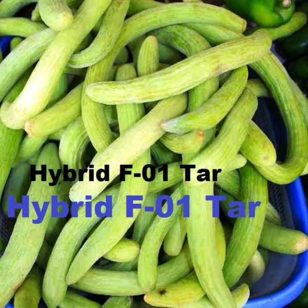 Hybrid F-01 Tar Vegetable Seeds
