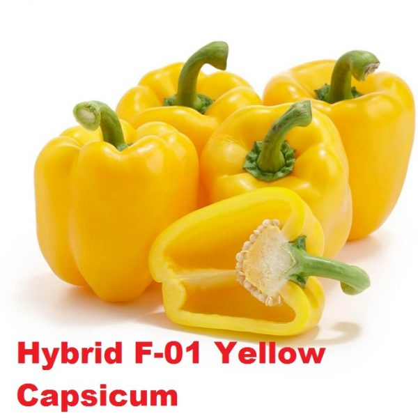Hybrid F-01 Yellow Shimla Mirch Seeds